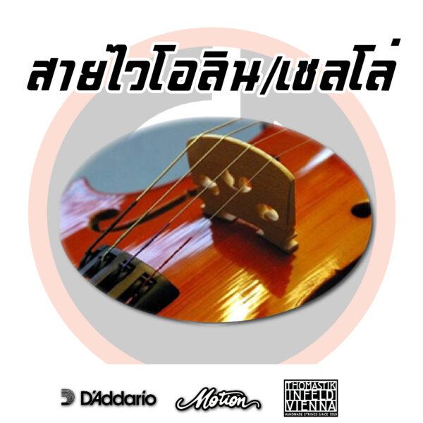 สายไวโอลิน,เขลโล่/Violin String,Cello